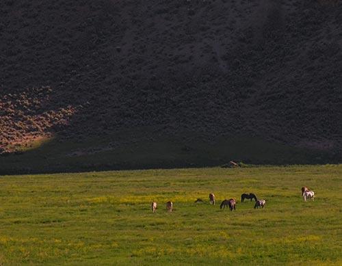 wild-horses-greenfire.jpg