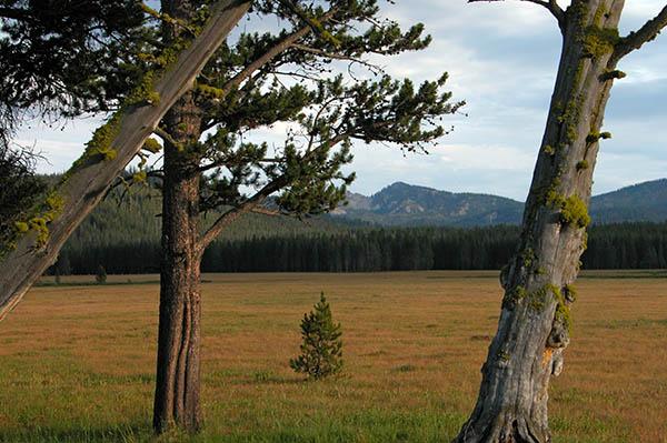 cache-meadow2-2.jpg