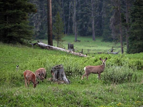 deer-potamogeton-park.jpg