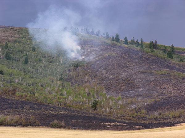 mitchell-wildfire1.jpg