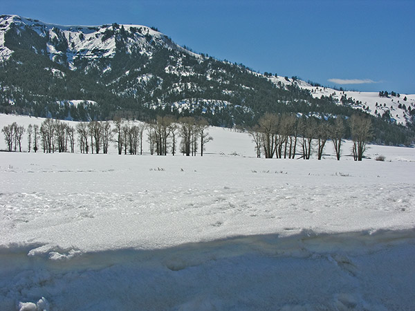 Deep April Snow in the Lamar Valley