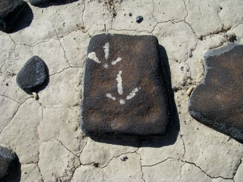 Sage Grouse Rock Art