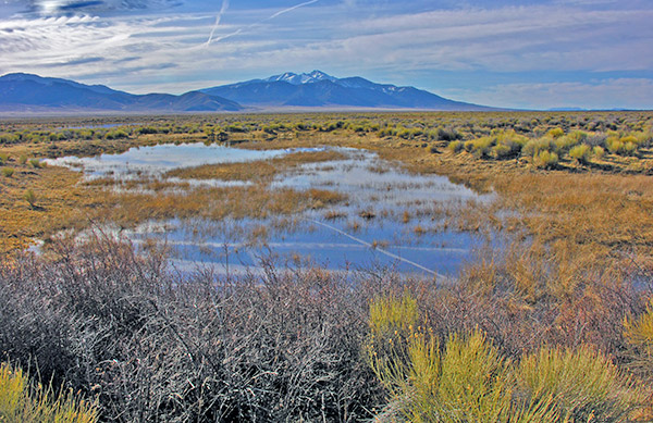 Wheeler Peak in the distance from a spring in Spring Valley, Nevada