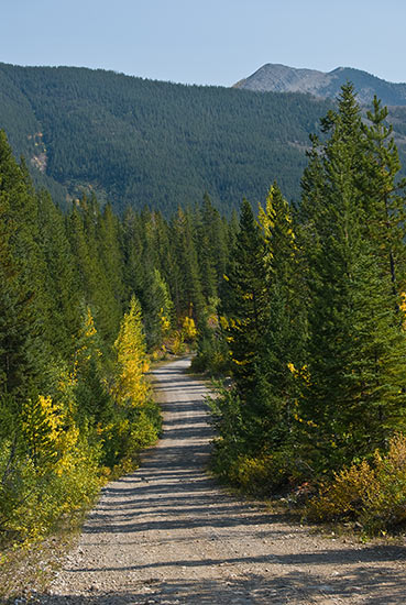 The rocky North Fork road about 15 miles north of the border. Copyright Ralph Maughan