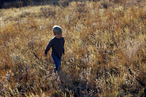 Diverse grasses follow rest from livestock grazing on your public land in central Idaho.  Photo © Brian Ertz