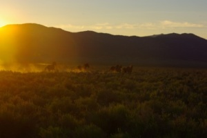 Wild Horses © Ken Cole