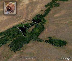 Beaver pond complex