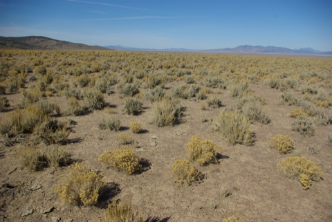 Heavily impacted soils and vegetation in Nevada's desert. © Ken Cole