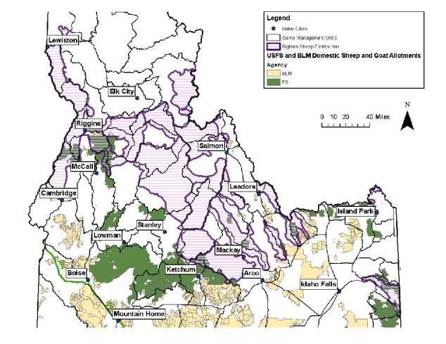 Bighorn distribution and domestic sheep and goat allotments in central Idaho