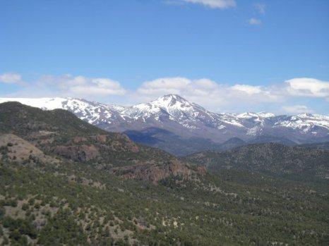 Pinyon Juniper Forest, Nevada.  Photo - Katie Fite